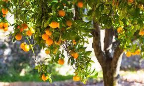 Bear Fruit that Befits Repentance